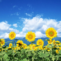 مجموعه تصویر های نایاب از گل ها